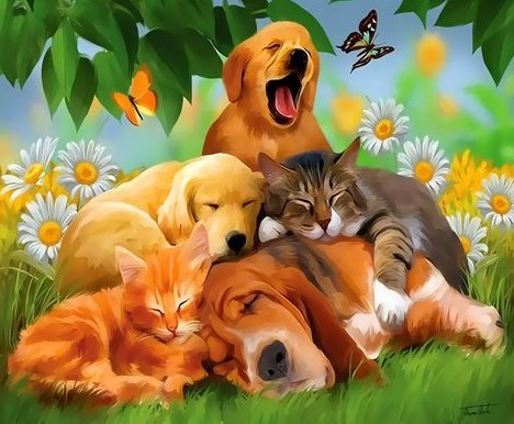 Картина по номерам 30x40 Собаки и коты среди ромашек